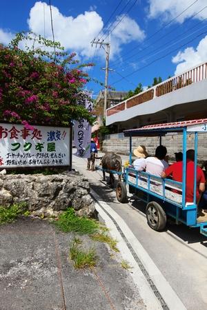 備瀬のフクギ並木・牛車(縦):No.0381