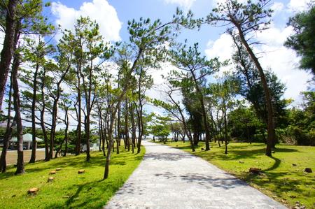 平和記念公園・平和の火付近の並木道(横):No.0830