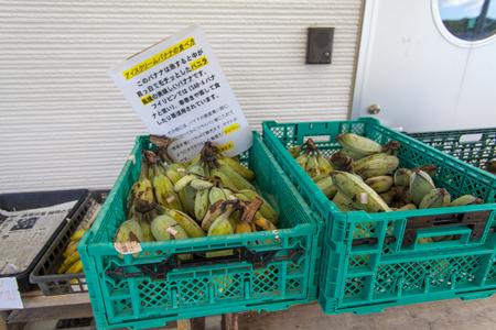 アイスクリームバナナ(横):No.1409