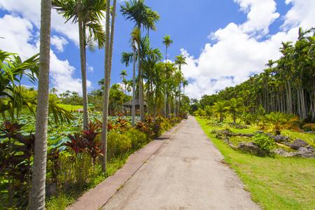 東南植物楽園・ヤギ島付近の通路(横):No.1871