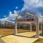 伊江島ハイビスカス園・外観(横):No.2594