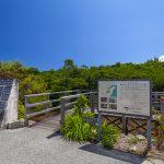 島尻のマングローブ林・入り口付近(横):No.3132