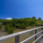 島尻のマングローブ林(横):No.3133