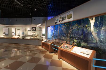 久米島博物館・館内(横):No.3423