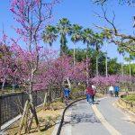 与儀公園ガープ川沿いの寒緋桜と花見客(横):No.3670